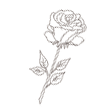 roseonly
